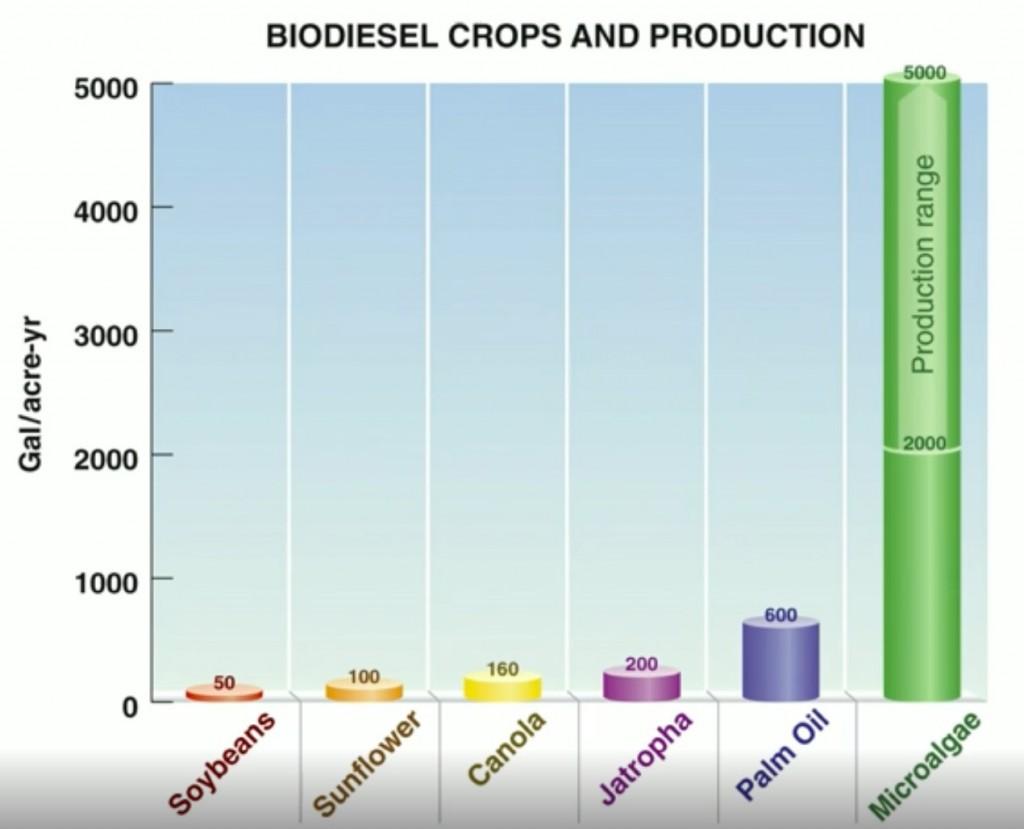 Les microalgues dépassent de loin la capacité de production d'énergie des biocarburants.